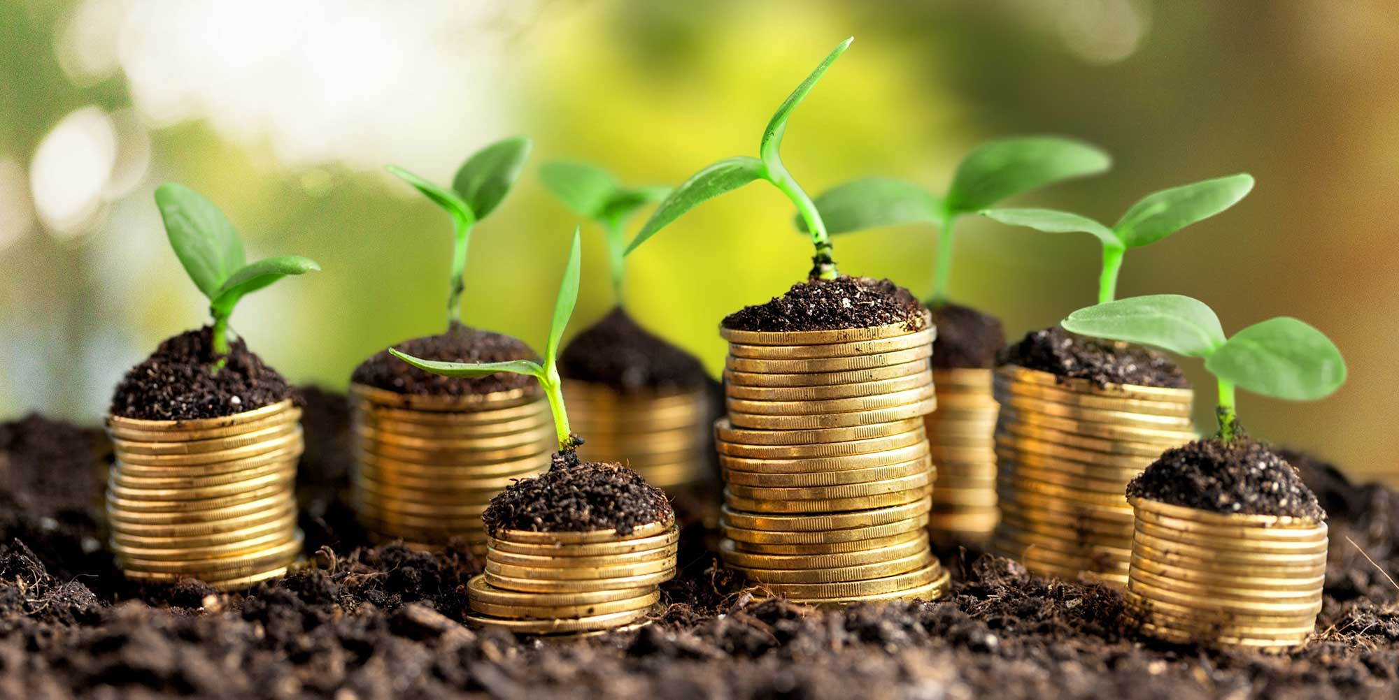 Financial Planning - First Royal Holdings